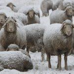 Apie ūkinių ir naminių gyvūnų priežiūrą