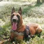 Pasieniečių šuo surado miške pasiklydusį žmogų
