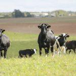 Tiesioginių išmokų prognozės: kas laukia ūkininkų