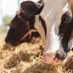 COVID-19 paveiktiems ūkiams ir nedidelėms įmonėms – išimtinė laikina parama