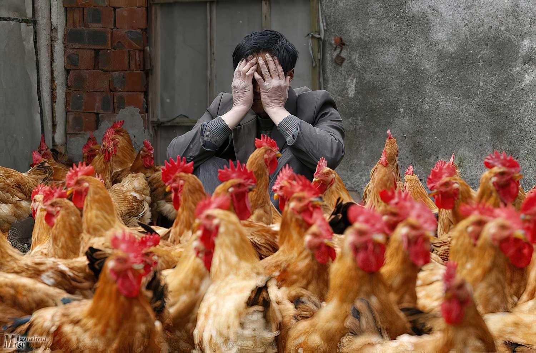 Europoje plintantis paukščių gripas pasiekė Lietuvą