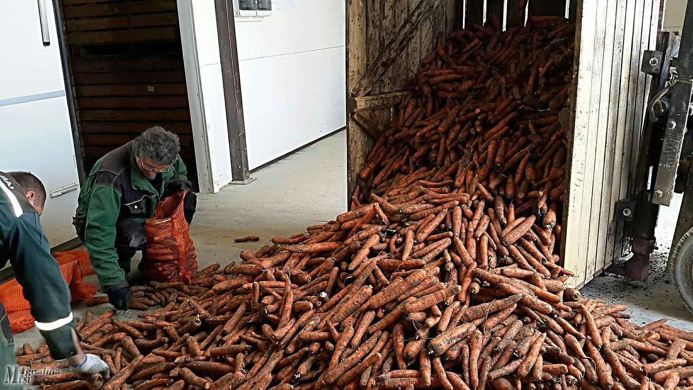 """ŽŪK """"Jakiškiai"""" augina ir tiekia rinkai įvairias daržoves."""