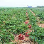 Smulkieji ūkiai vėl gali kreiptis paramos
