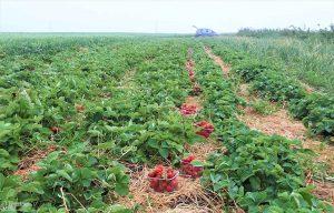 """""""Parama smulkiems ūkiams"""" suteikia galimybę palengvinti darbą ir padidinti produktyvumą."""