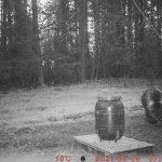 Į Stripeikius atėjo meška