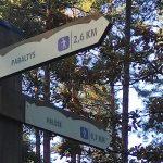 Ir per ANP teritorijoje esančius urėdijos miškus visi keliai veda į Romą? (1)
